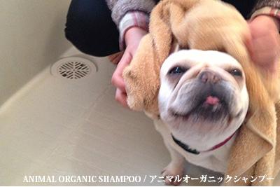 ANIMAL ORGANIC SHAMPOO / アニマルオーガニックシャンプー